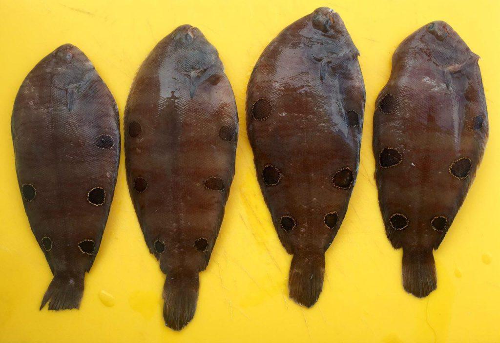 Рыба морской язык